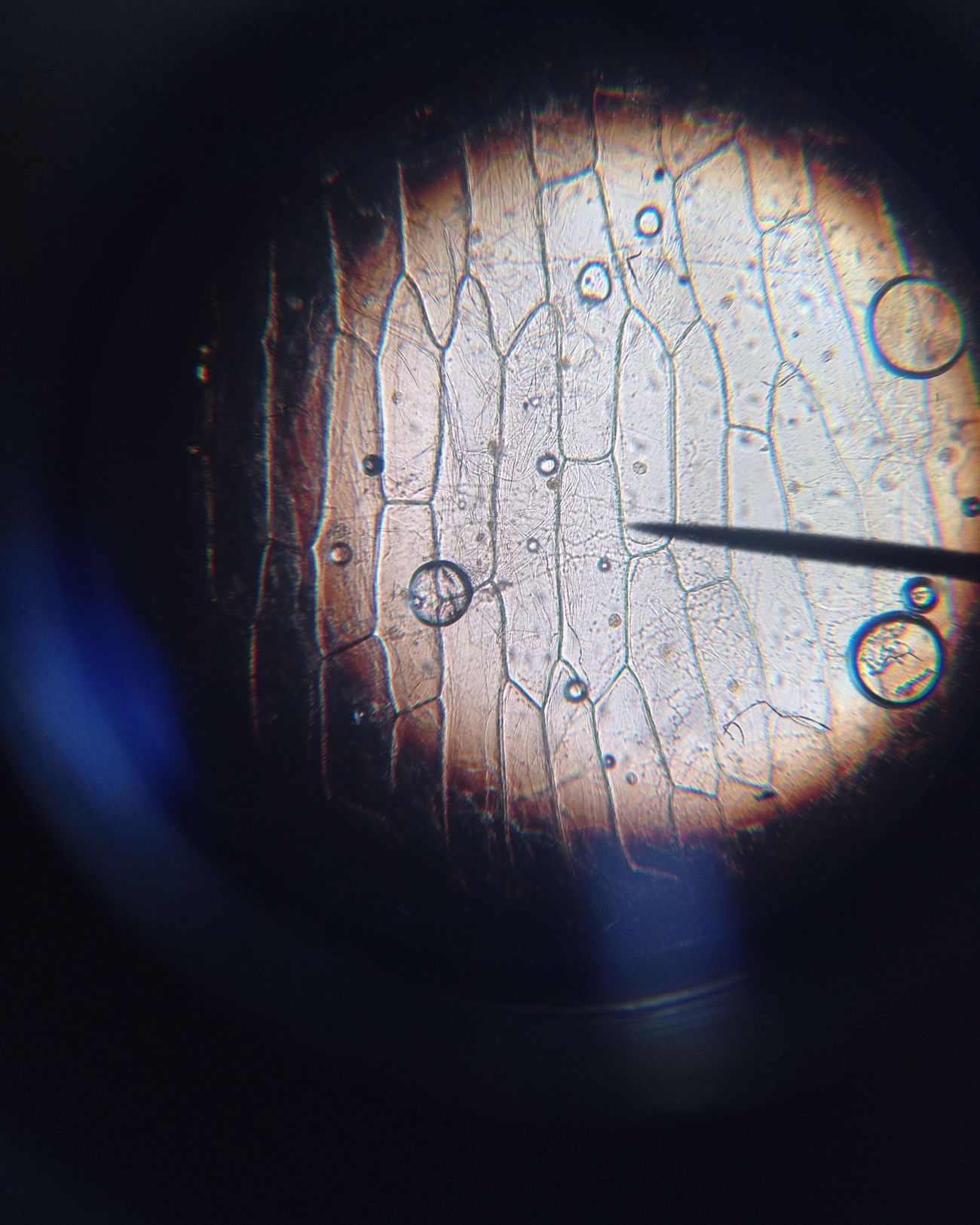 Microscopes always Fascinate me