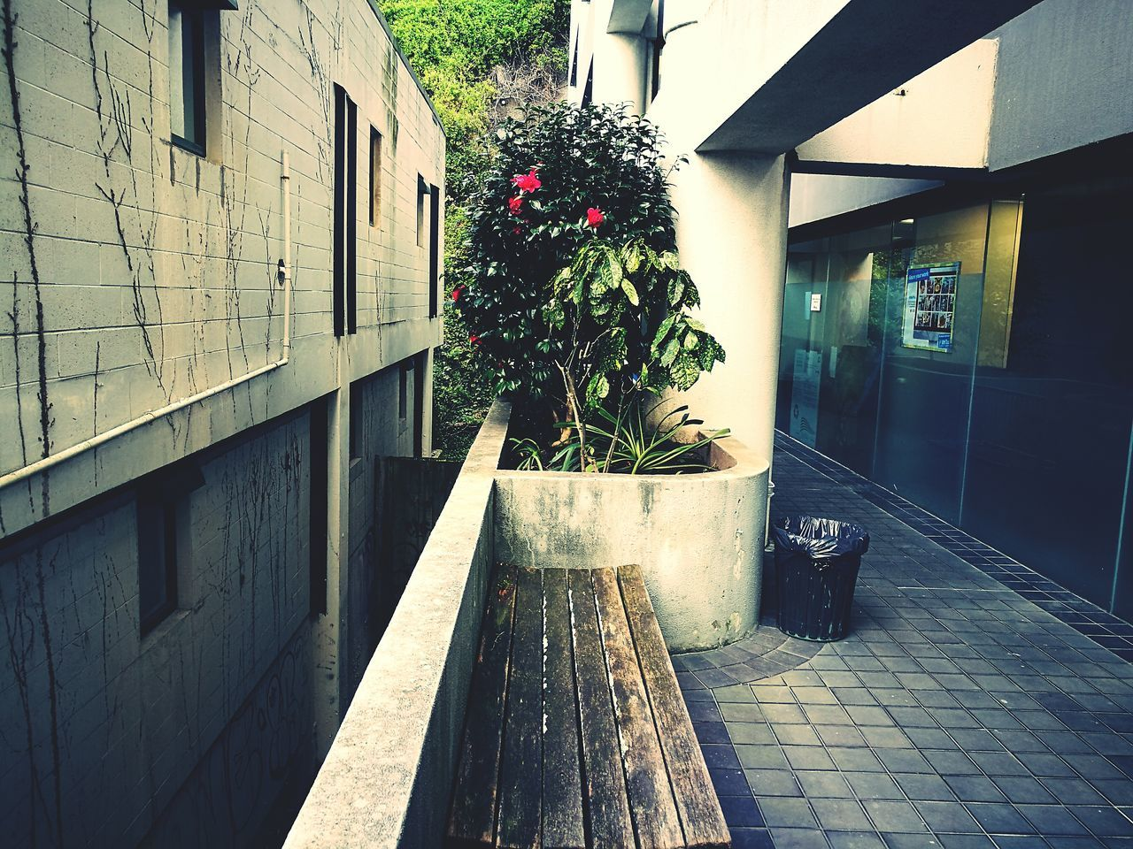 architecture, built structure, building exterior, potted plant, house, plant, no people, outdoors, growth, day, nature