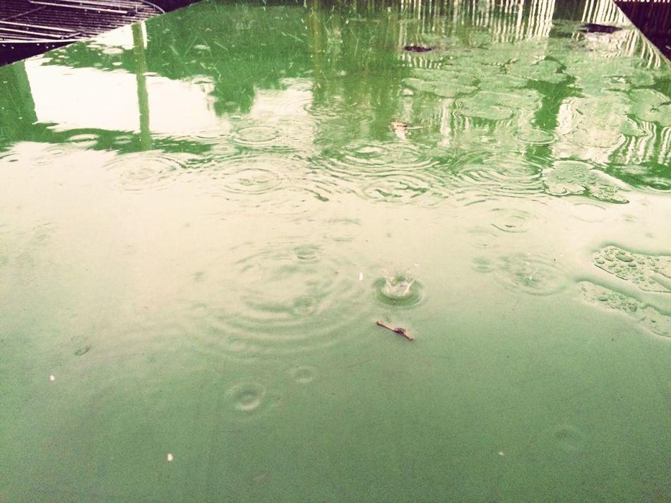 It's Raining Cats And Dogs. Raining Raining Outside When It's Raining Rain☔ Green Balcony View BBQ Time