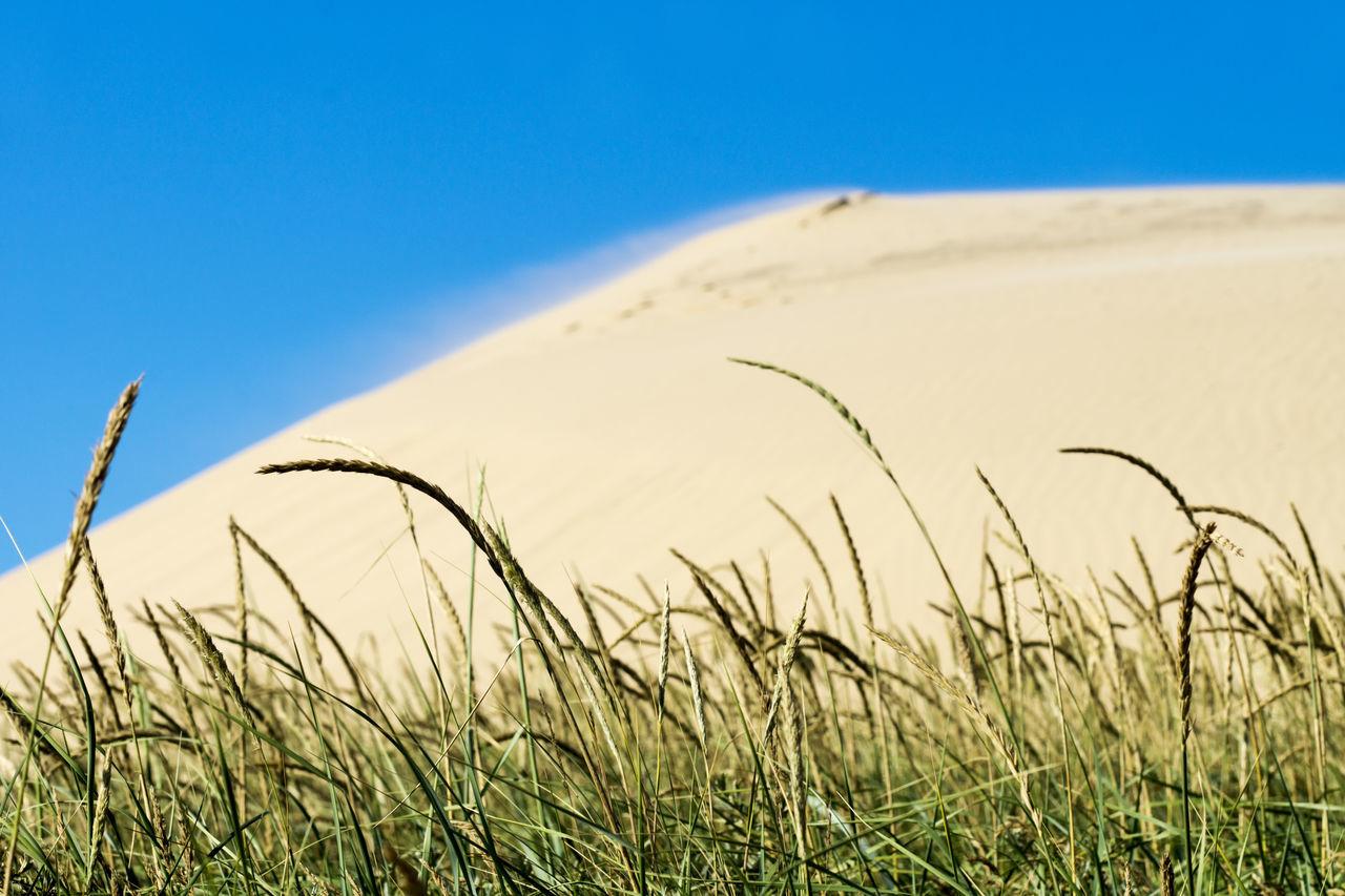 Sand dunes of Rubjerg Knude in Denmark Dunes Jutland, Rubjerg Knude Beauty In Nature Clear Sky Nature No People Outdoors Sky Wandering Dune