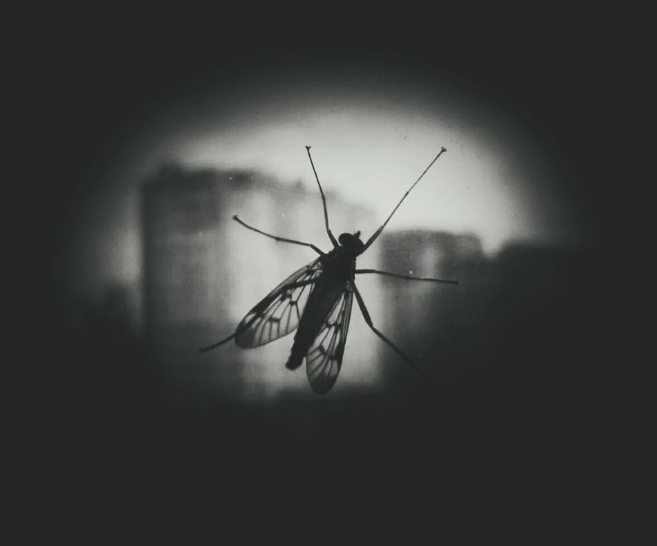 Black&white Black & White Black And White Photography