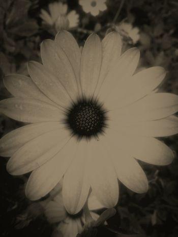 Black And White Blackandwhitephotography Flowerporn Flowers Nature_collection EyeEm Nature Lover Eye4photography  EyeEmBestEdits EyeEm Gallery Enjoying Life