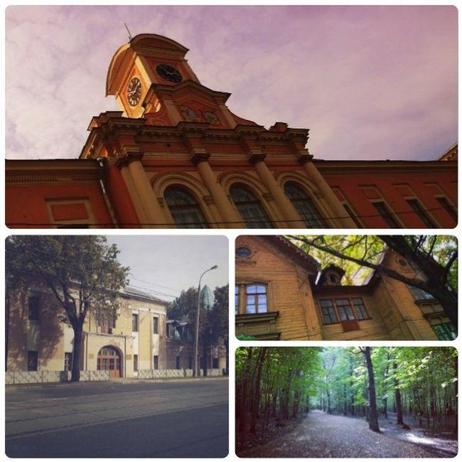 Прогулка через парк до ВУЗа теплым осенним вечером Москва тимирязевка тимирязевскийпарк тимирязевскаяакадемия