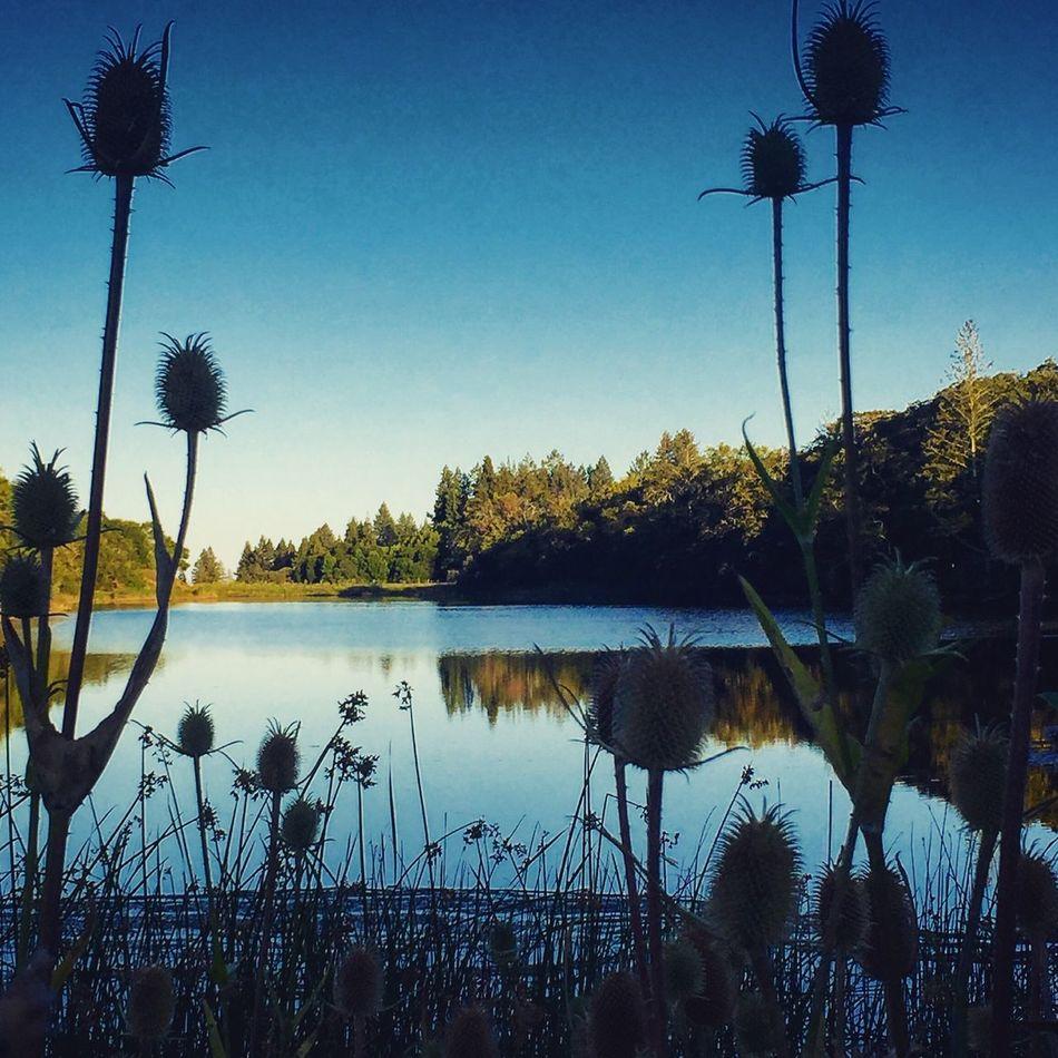 Lake Trees And Sky Mountainbike Greenmountain Reflection