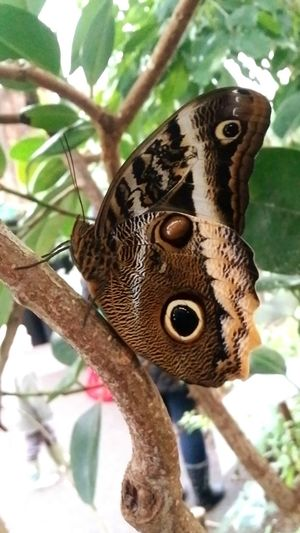 Bristol Zoo EyeEm Best Shots - Nature Butterfly Butterfly ❤ EyeEm Best Shots Butterfly Encounter Nature_collection Naturephotography Naturelover