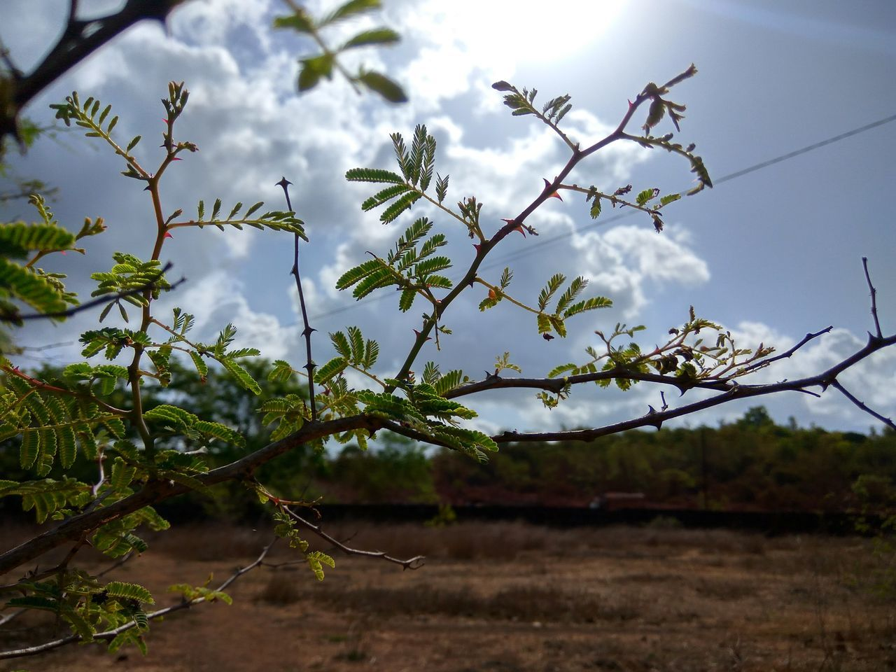 growth, nature, plant, no people, day, tree, beauty in nature, outdoors, branch, sky, freshness, fragility, close-up