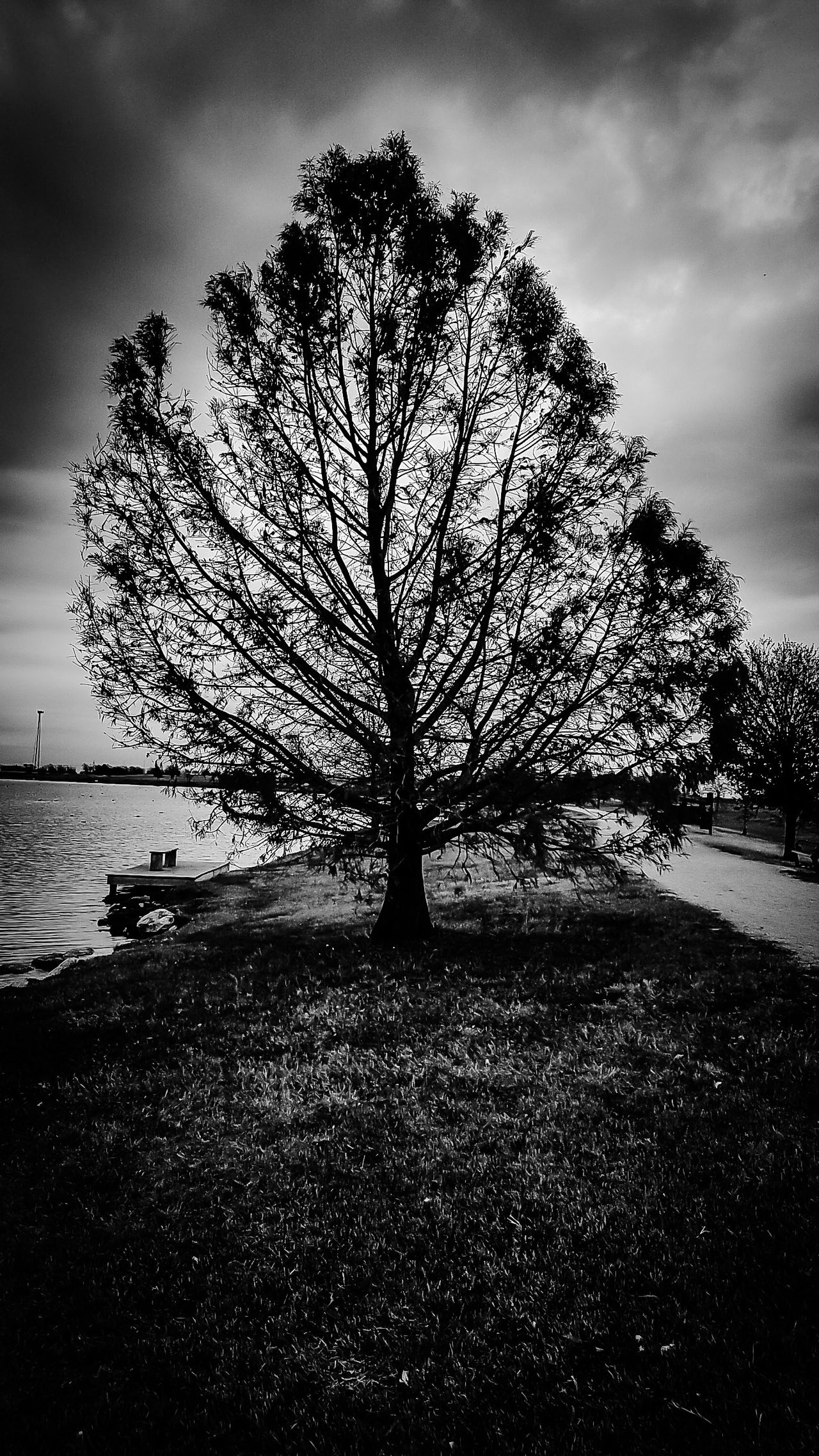 Tree Of Life ? Nature Cloud - Sky Tranquility Beauty In Nature Day Austin Texas No People Tree Blackandwhite_streetphotography B&W_collection Black And White Collection  Mother Nature Is Amazing Black & White Photography