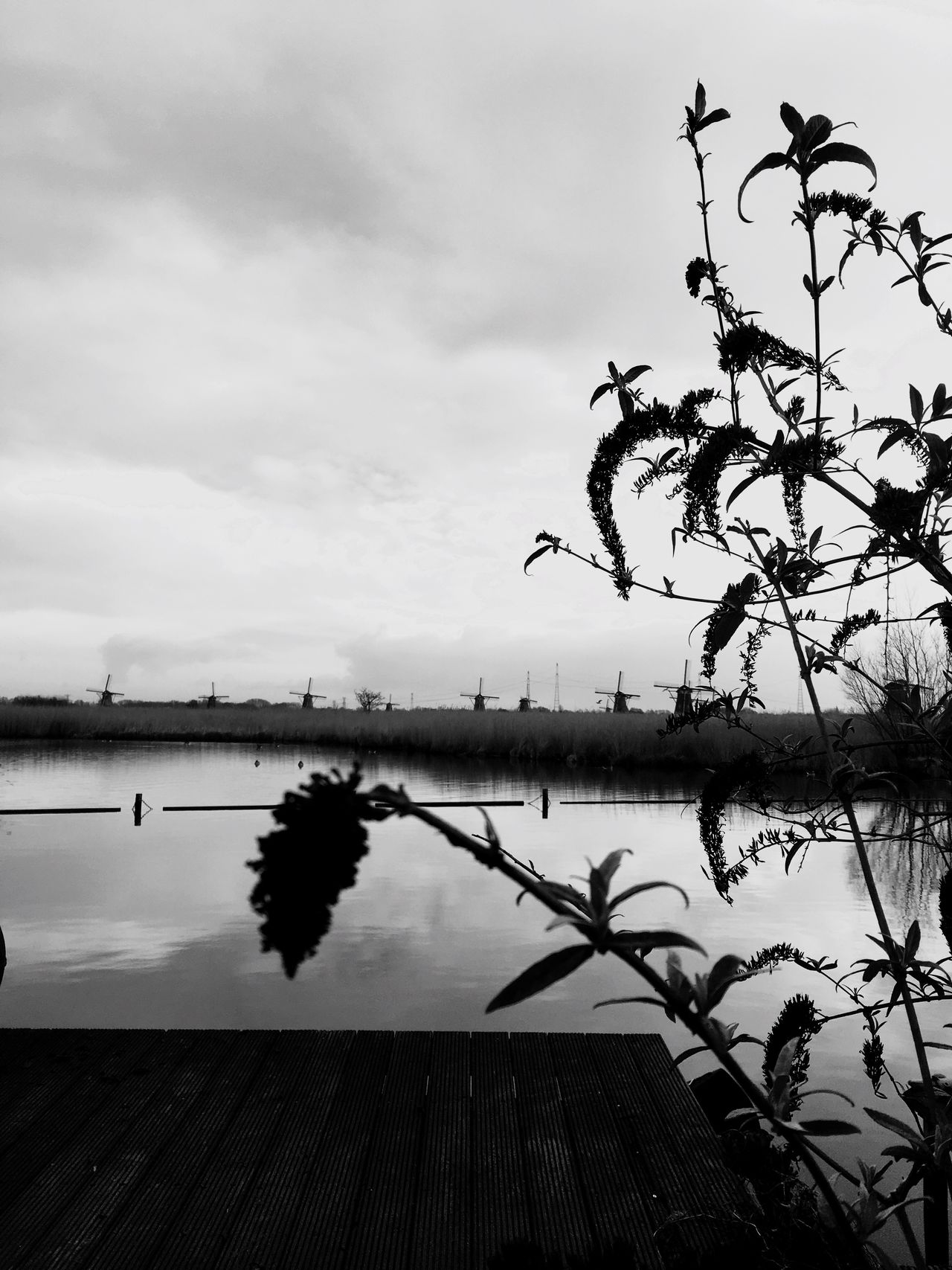Sky Water Tree No People Nature Cloud - Sky Lake Tranquility Outdoors Growth Beauty In Nature Day