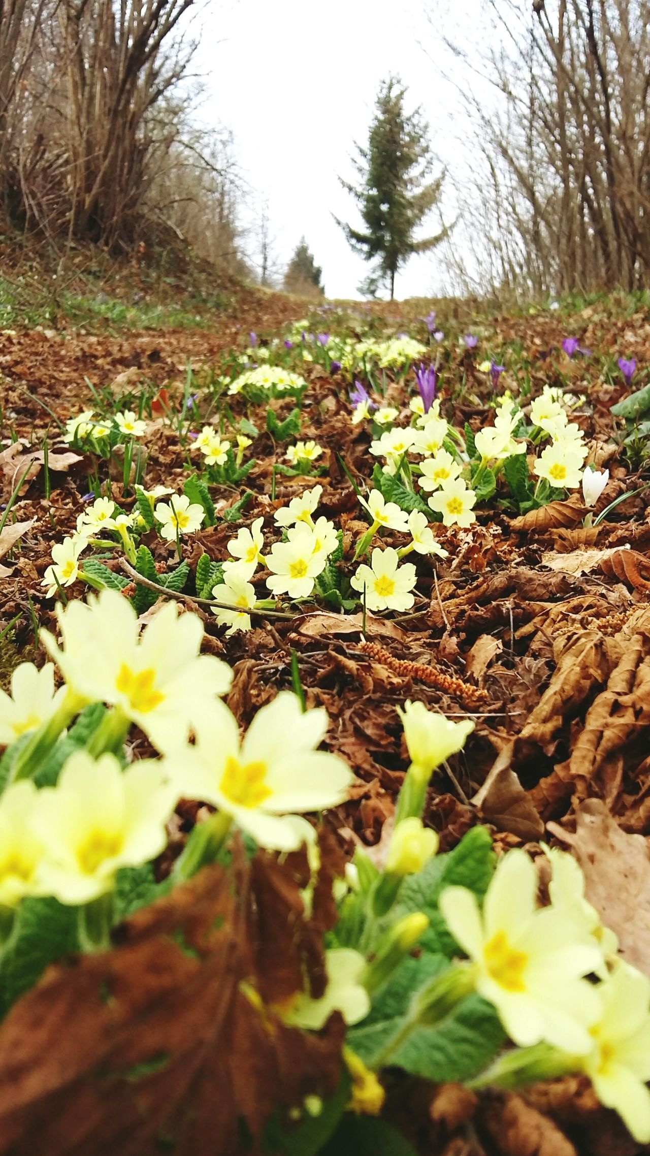 Growth Flower Nature Tree Beauty In Nature Beautiful Day No People Plant Scenics Fragility Outdoors Flower Head Freshness Close-up Day Primroses Primrose