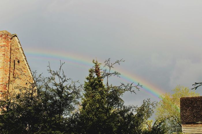 Rainbow Low Angle View Outdoors No People Nature Tree Multi Colored Day Sky Beauty In Nature Spectrum Canonphotography
