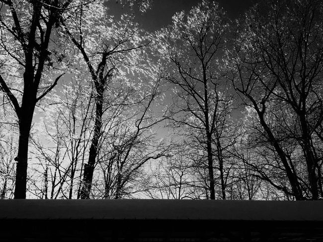 Silhouette Tree Bare Tree Landscape Tranquil Scene Low Angle View Nature Beauty In Nature Sky Outdoors Non-urban Scene Dark Solitude Ice Age Ice Storm Blackandwhite Black And White EyeEm Best Shots