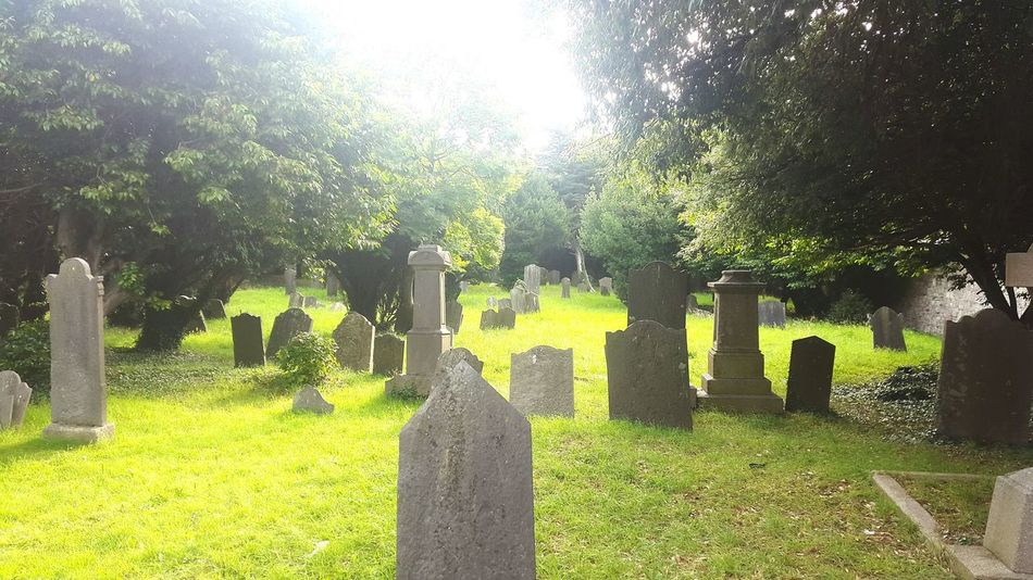 I don't wanna be buried in a pet cemetery, I don't want to live my life again Ramones