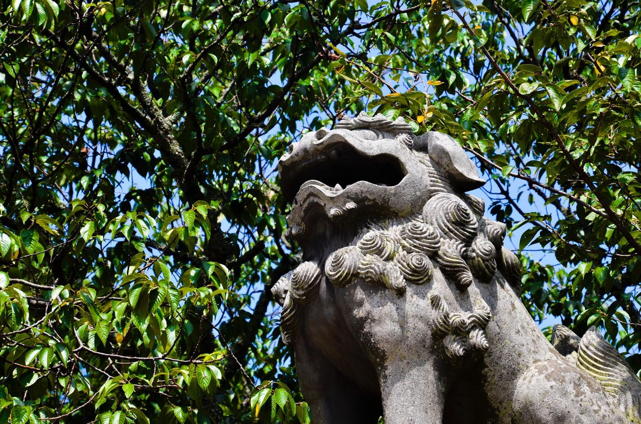Tree Outdoors No People Cultures Day D7000 Nikon Vacations Beauty In Nature Nature Forest Komainu