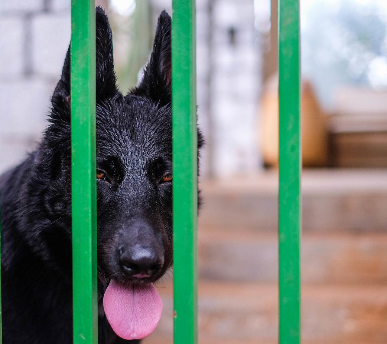 Portrait Of Dog Behind Gate