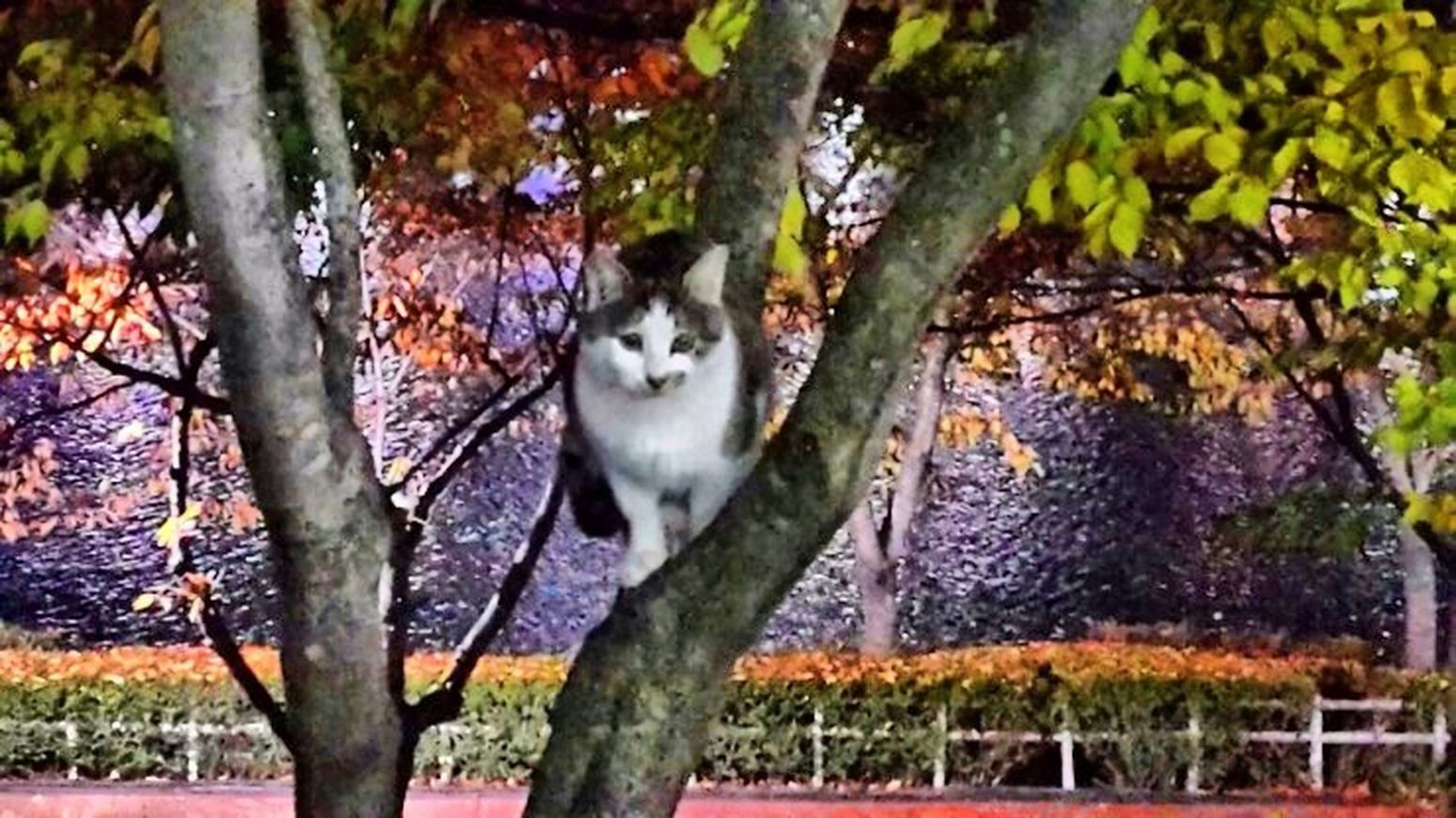 Very Cute Cat Seoukchon Lake Cats Nature Photography A Feral Cat Little Cats Alley Cat Cat Lovers LOTTEWORLD Autumn