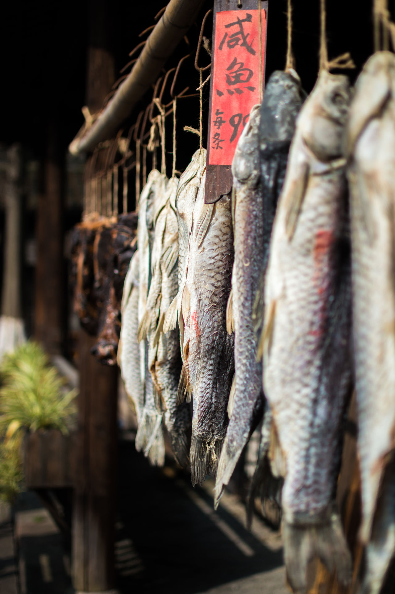 Salty fish, 99 cents each Business Finance And Industry Close-up Cultures Day Fish Hanging Market Market Stall No People Outdoors Retail