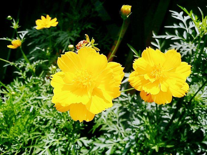 Pretty Yellow...😍
