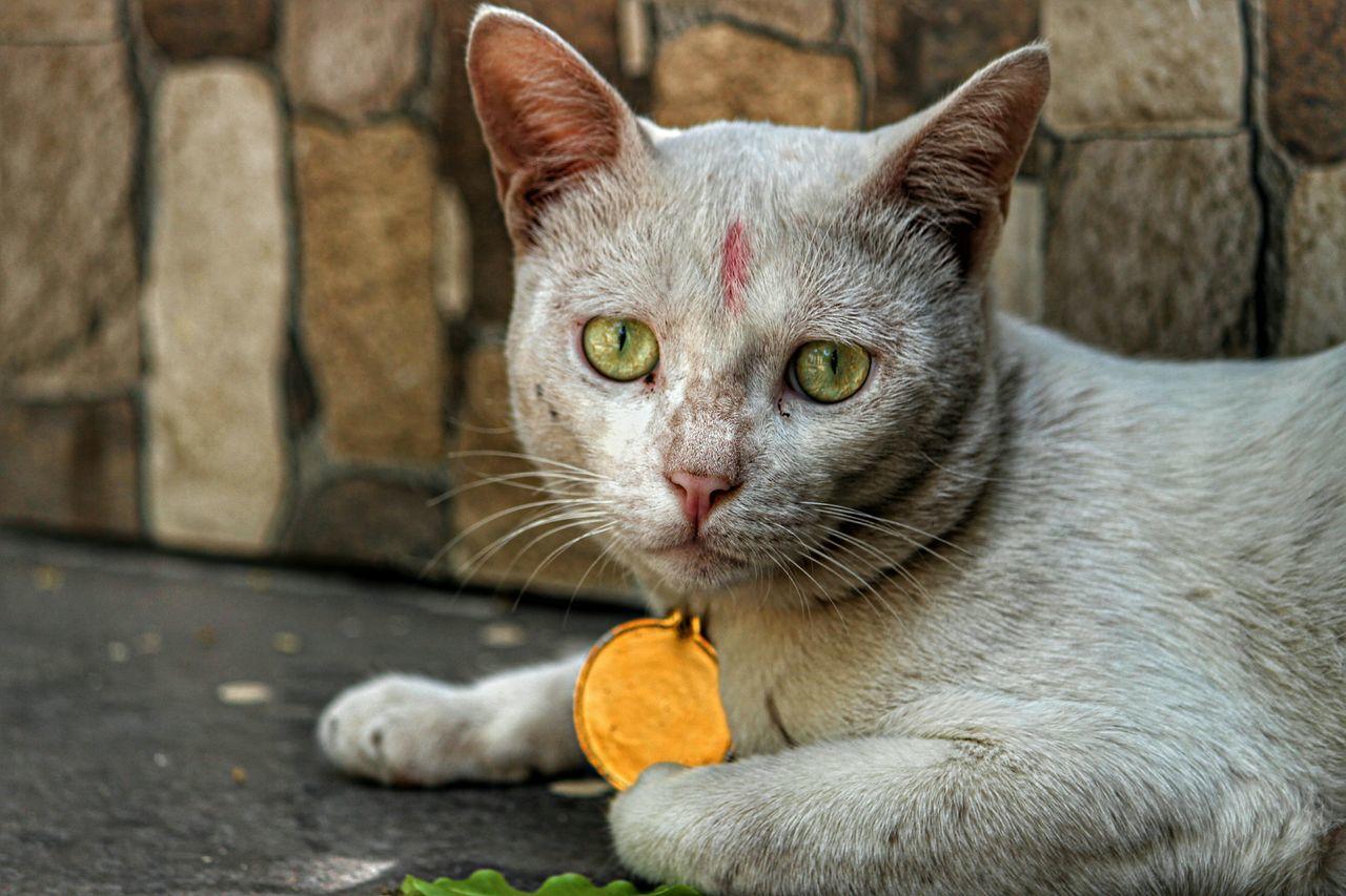 Beautiful stock photos of katzen, Alertness, Animal Themes, Cat, Close-Up