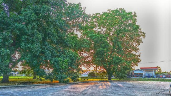 Sun Sunrise Landscape Landscape_Collection Green Tree Morning Taking Photos Check This Out Hello World Sun Light Built Structure Building Tent Pecan Trees Living In The Moment Nature