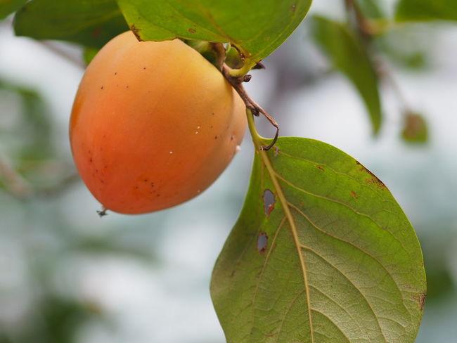 Leaf Close-up Green Color Freshness Agriculture Season  Leaf Vein Nature Growing No People 365