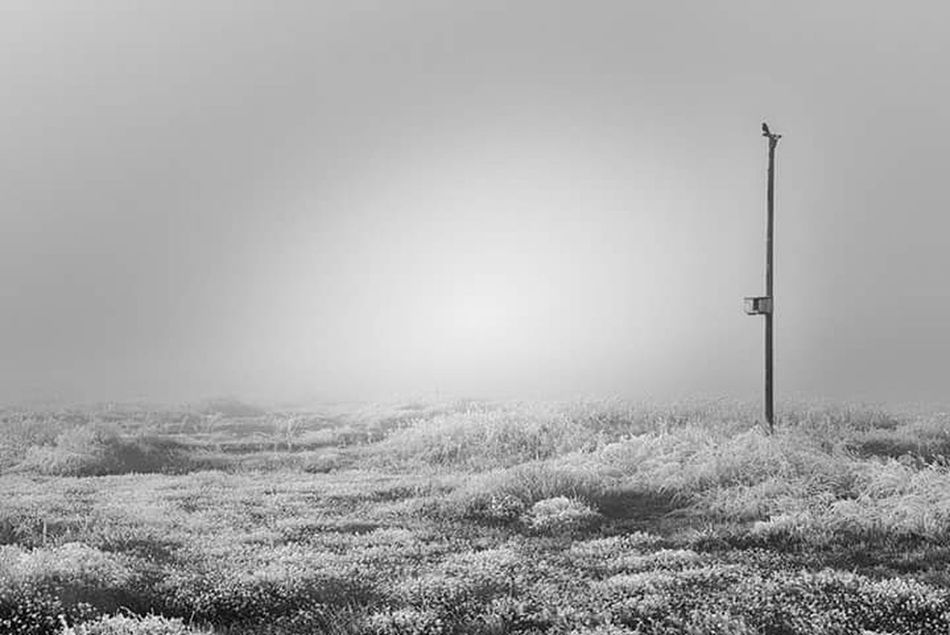 Nature Field Landscape Fog Foggy Morning Outdoors Campo Paisajes Naturales Iceland_collection Ice Hielo Winter Winter Wonderland Invierno InviernoenBlancoyNegro Beauty In Nature Alone Soledad Tranquility No People Clear Sky Day Grass Sky