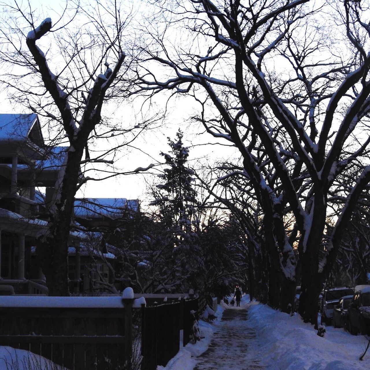 Nature Day Outdoors Bare Tree Architecture Sky City Tranquility Branch Cold Woman Walking Her Dog