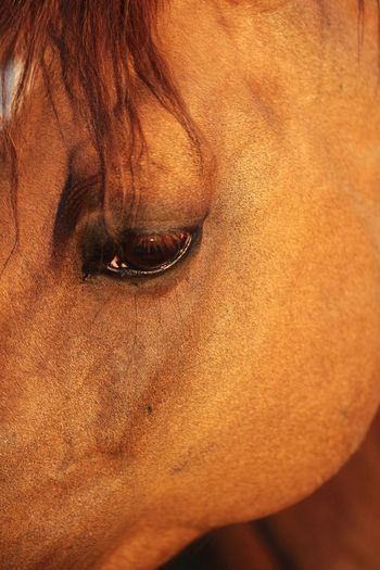 Eyesight Eyes Horseeye Horse Photography  Horses Horse One Animal Brown Animal Themes Domestic Animals Mammal Close-up No People Outdoors Day