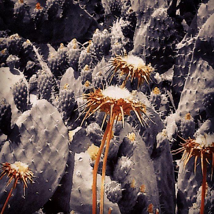 Torns Nature Flowers Color_splash tagsforlikes instamood photootag_it photos