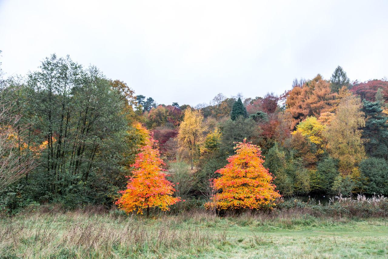 Winkworth Arboretum, a National Trust owned arboretum in Surrey, near Godalming. 4th November 2015. Arboretum Autumn Autumn 2015 Autumn Colors Autumn Colours Autumn🍁🍁🍁 Fall Fall Beauty Fall Colors Fall Colours Landscape Leaves Nature Surrey Trees Winkworth Winkworth Arboretum