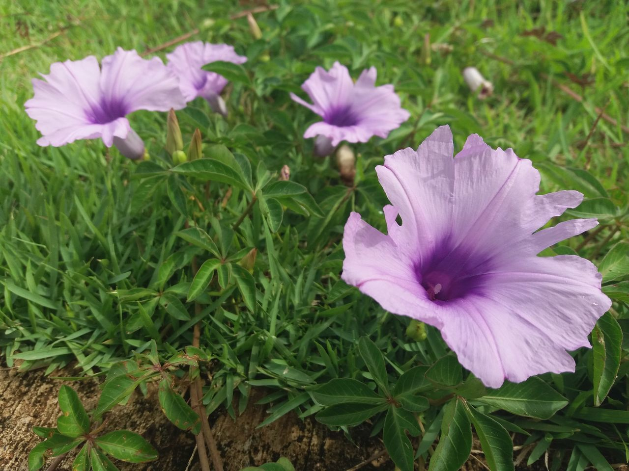 flower, petal, flower head, growth, beauty in nature, plant, nature, fragility, freshness, blooming, green color, white color, no people, field, outdoors, day, high angle view, one animal, purple, petunia, close-up, park - man made space, animal themes, leaf, grass, crocus