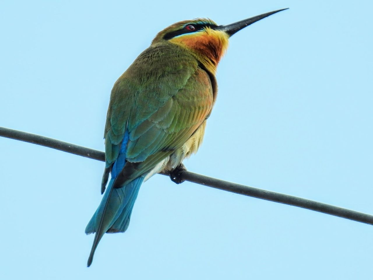 A Bluetailed Bee Eater Nature Nature Photography Clear Sky Bird Perching Nature No People Close-up Day Outdoors