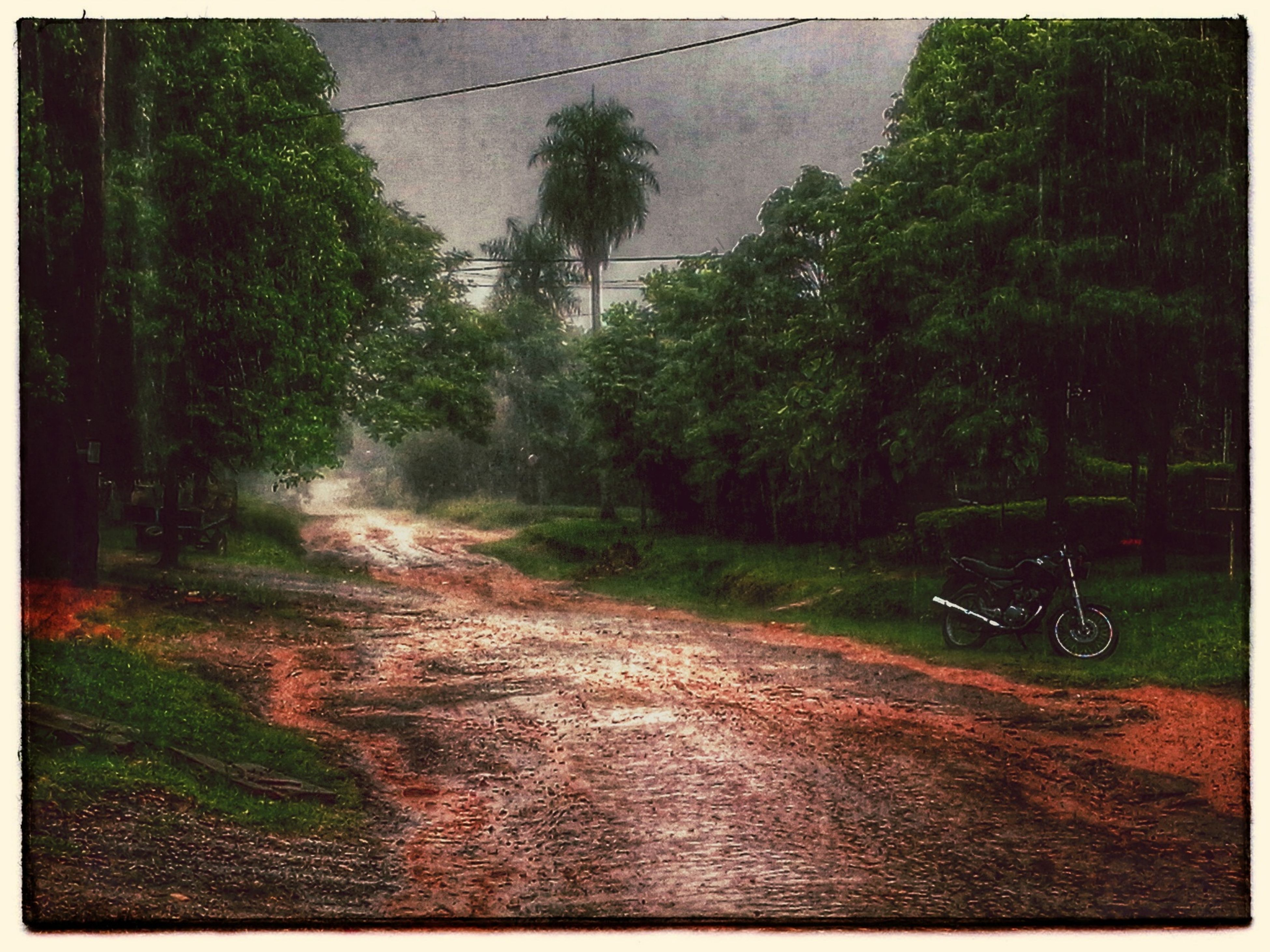 tree, the way forward, transfer print, auto post production filter, diminishing perspective, dirt road, road, transportation, tranquility, forest, nature, vanishing point, tranquil scene, growth, country road, outdoors, landscape, no people, empty road, beauty in nature