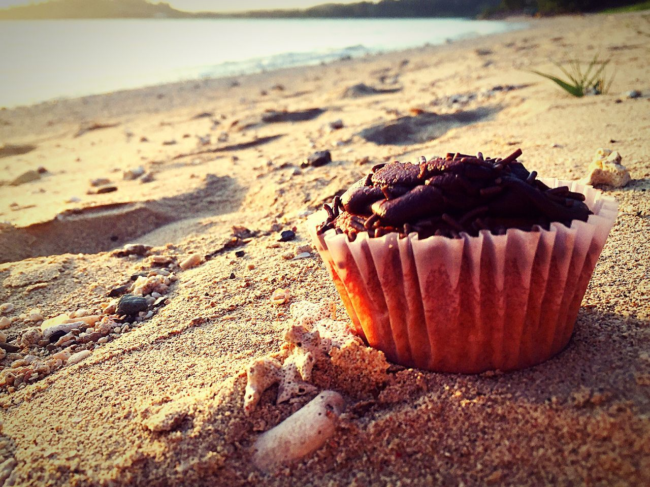 ShareTheMeal Outdoors Cupcake Colors Sweet Food Sharefood Share My Thoughts One Cupcake Loner BeachbumClose-up Food Sea Ready-to-eat Food And Drink