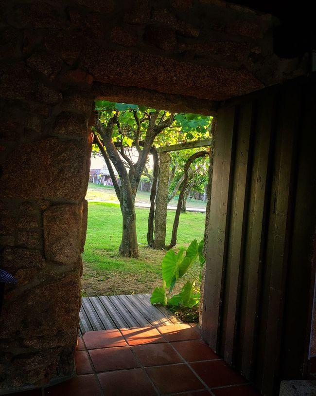 Doorway Vineyard