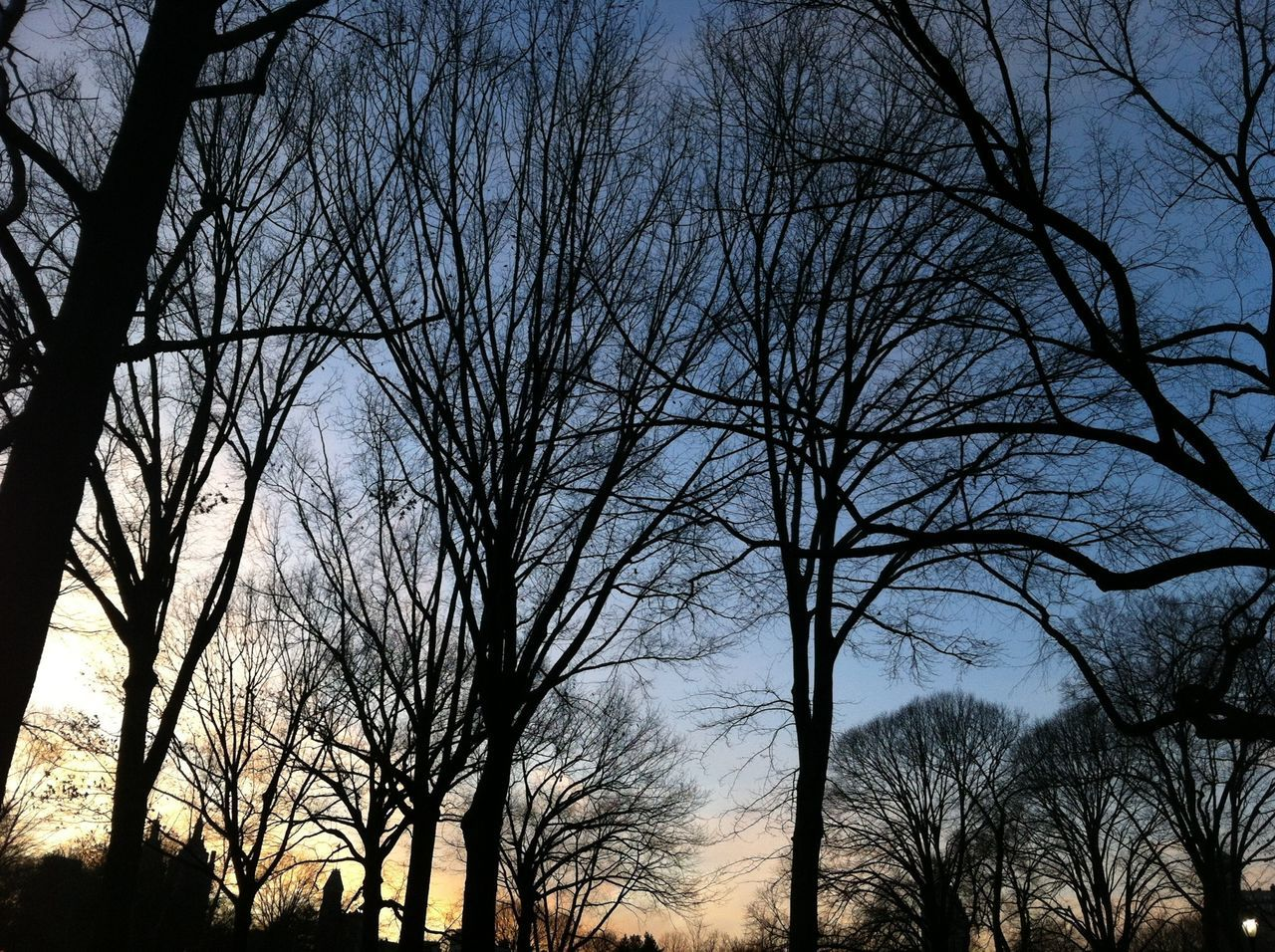 Hugging A Tree Sunset Brunches Winter Cold Sky