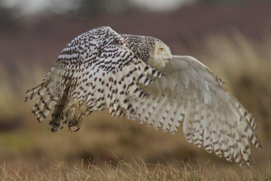 Beautiful stock photos of eule, one animal, animal themes, animals in the wild, bird