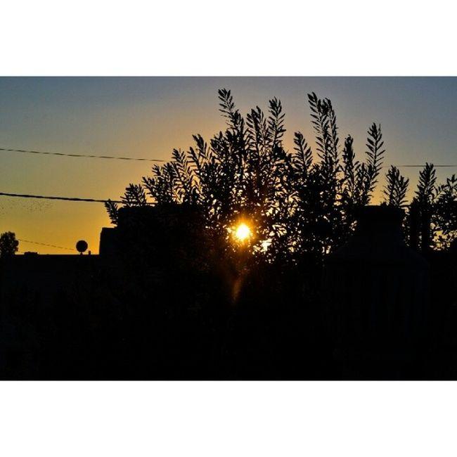 Sun Sunset Sky Sky_masters skyviewers skymasters skymaster tree olive leaves amman jordan seeamman beamman spiritofjordan discoveramman discoveramman discoverjo