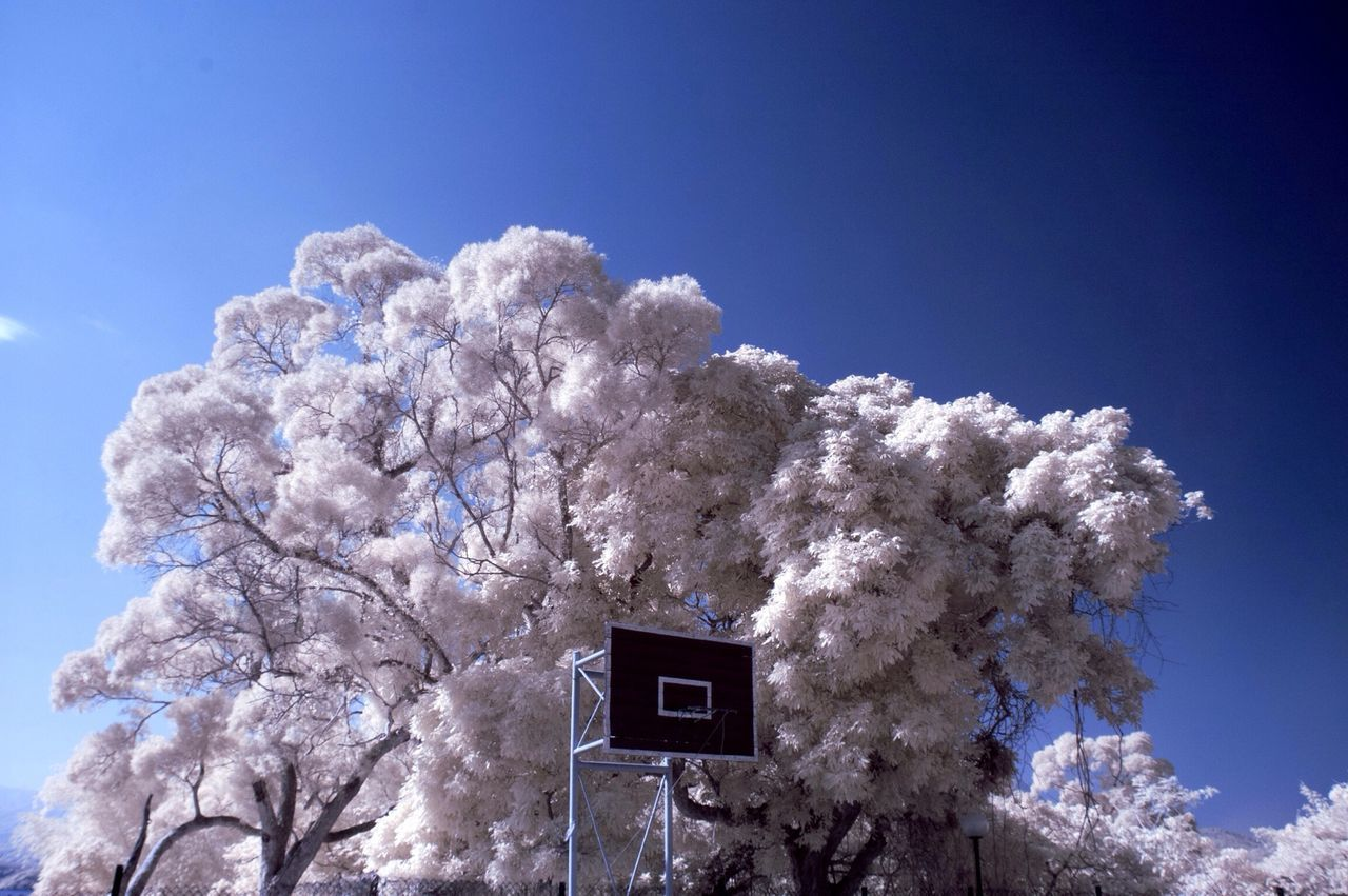 Beautiful stock photos of basketball, Absence, Basketball, Basketball Hoop, Beauty In Nature