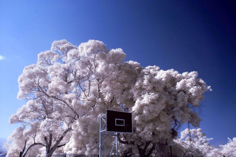 Beautiful stock photos of basketball, Absence, Basketball, Basketball Hoop, Beauty In Nature