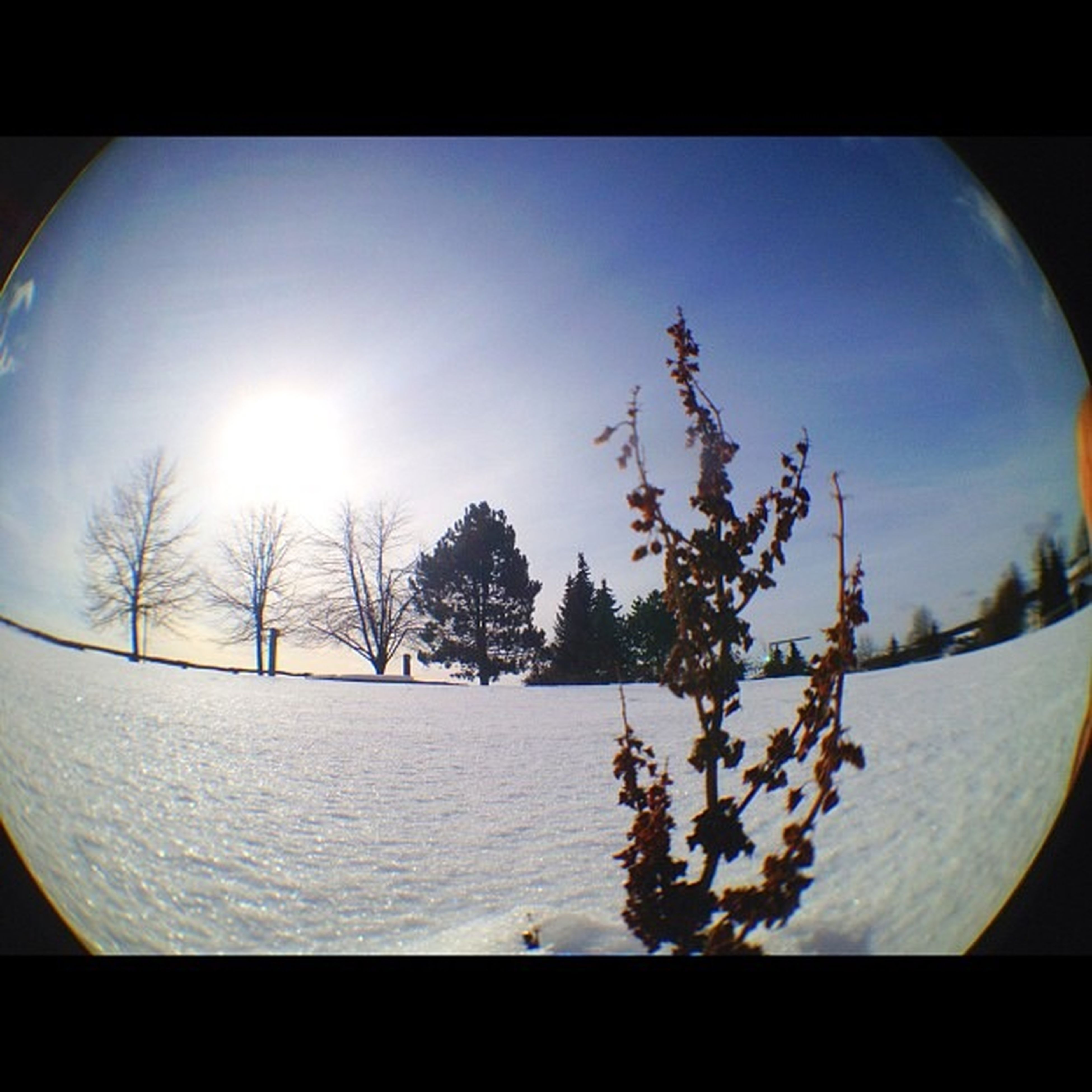 snow, transfer print, tree, sunlight, white color, beauty in nature, nature, winter, cold temperature, sun, flower, growth, auto post production filter, sky, season, plant, close-up, day, branch, indoors