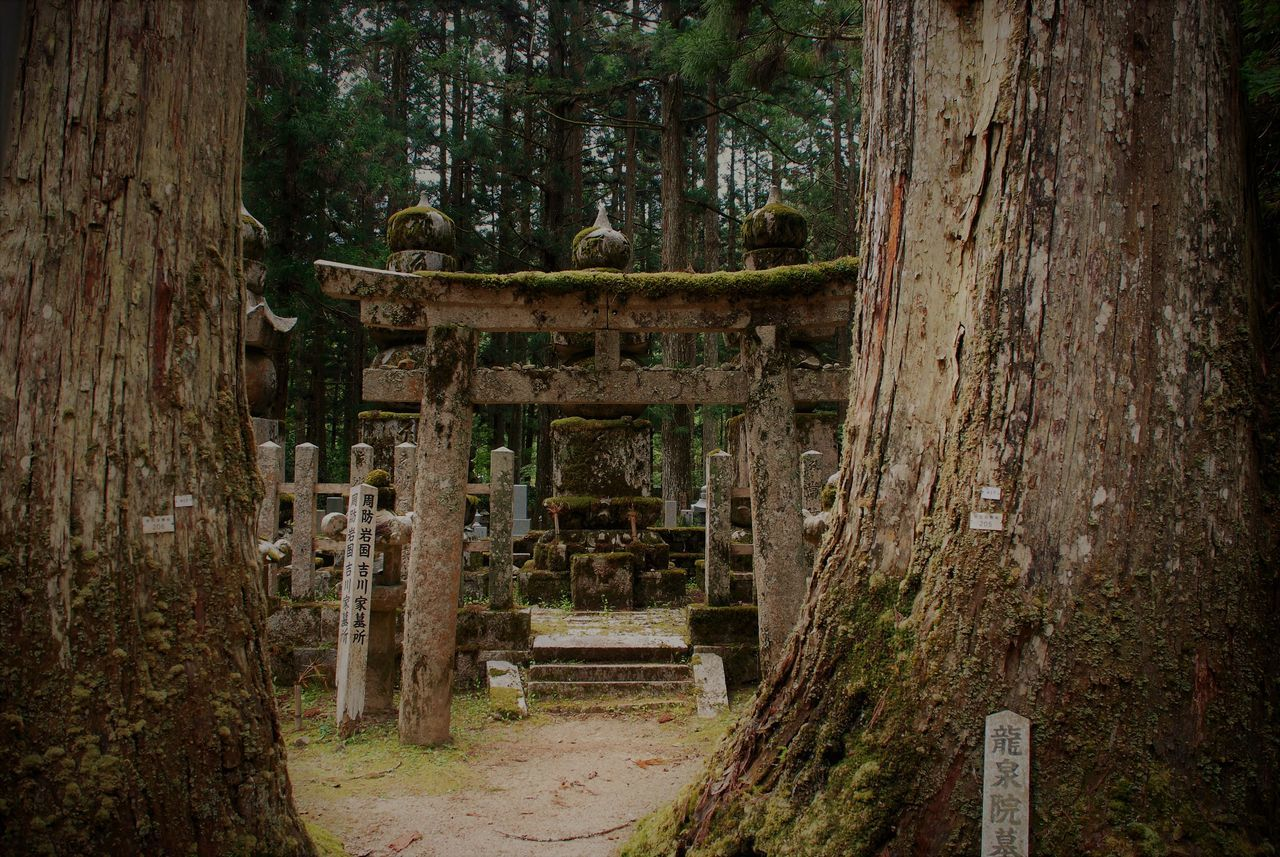 2013 Oku No In Koya San Cimetary Cultures Day Nature No People Outdoors Tranquility Tree