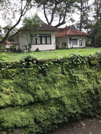 Bali, Indonesia Green Color Architecture Building Exterior Built Structure Day Grass House Moss Nature No People Outdoors Tree