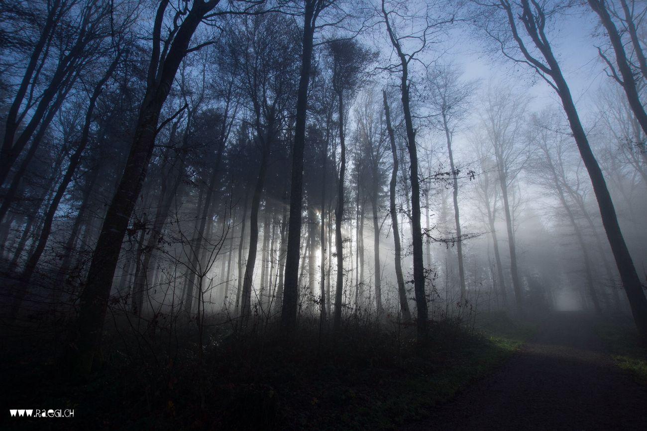 Foggy Forest Nebelwald Nebel Wald Fotografieren Im Wald am fötele Beim Fotografieren Waldspaziergang Ohne Schuhe Ohne Blätter Bim Fötele