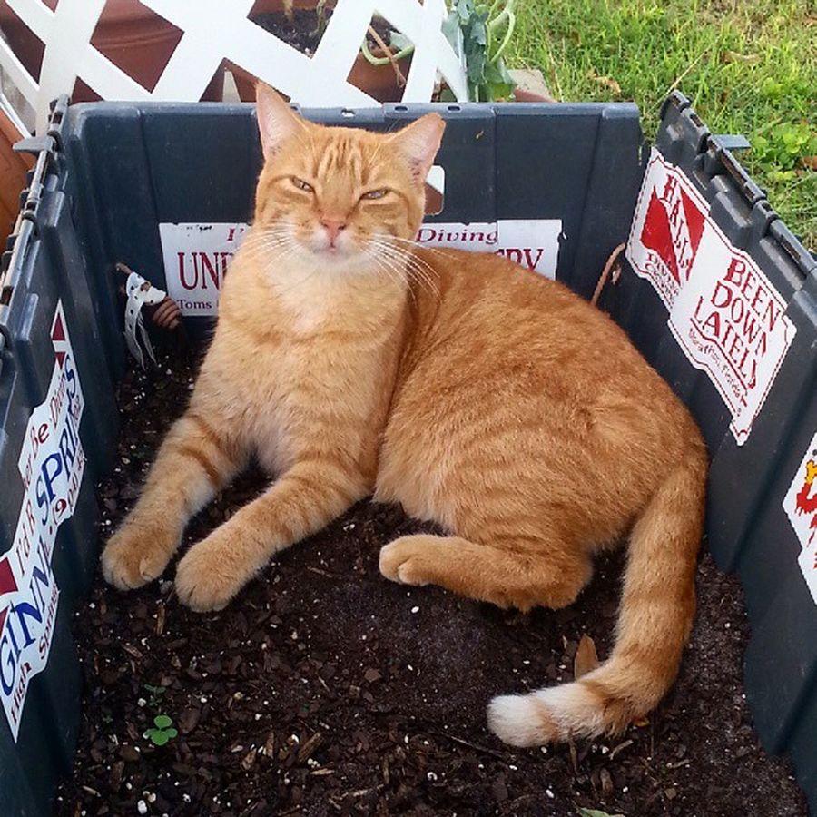 Homegrown cat! Catsofinstagram Instacats Cat Catsinabox box homegrown