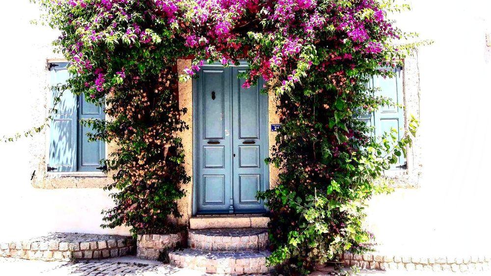 Finding New Frontiers Flowers Colour Of Life No People Door Blue Bink Green Sun Tree Day