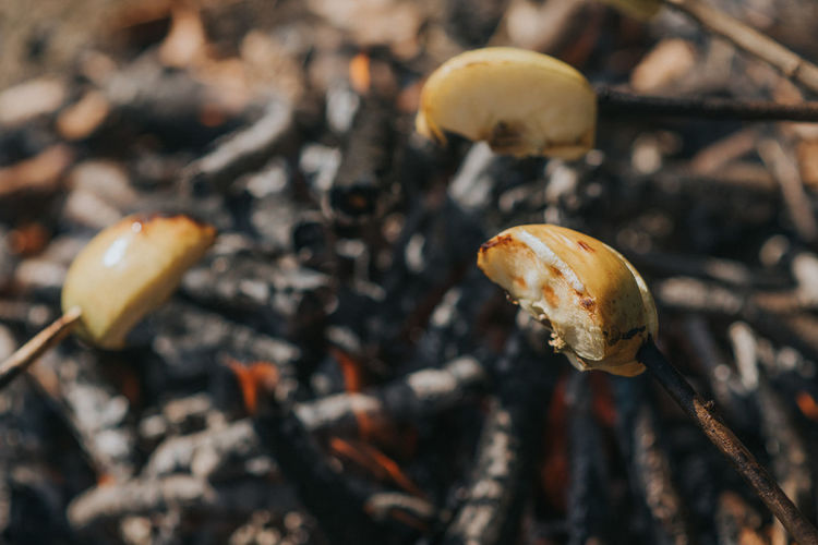 Camp Fire Close-up Day Fire Food Food Photography Grill Grilled Fruits Nature No People Outdoor Outdoors