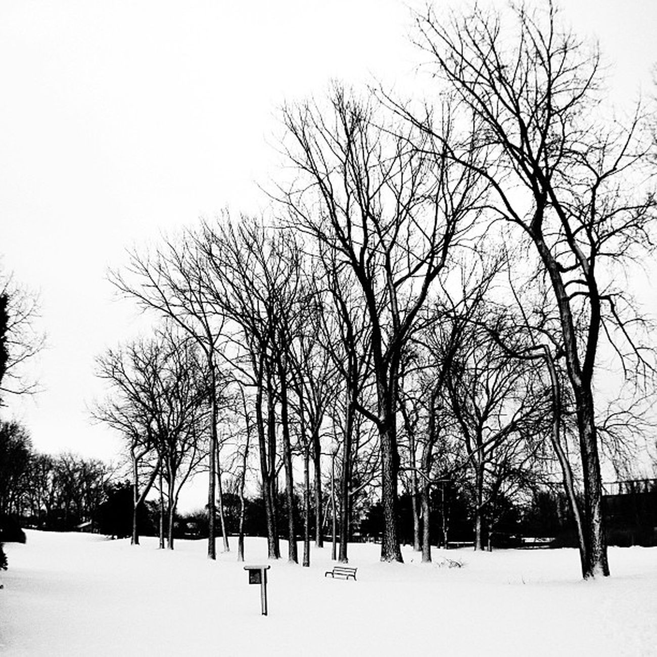 Snow on the 9th hole. #bw #bnw #bw_crew #bw_lovers #bwmasters #most_deserving_bw #insta_pic_bw Bw Bnw Bwmasters Bw_lovers Bw_crew Most_deserving_bw Ic_trees Insta_pic_bw Branching_out