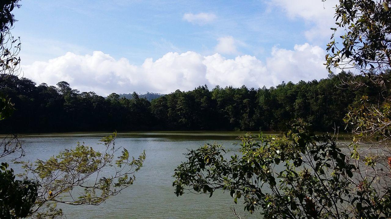 Beautiful stock photos of mexiko, tree, tranquil scene, water, scenics