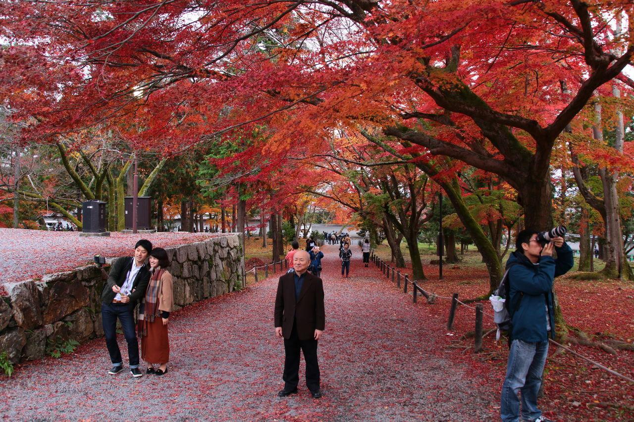 My Year My View Selfie Being Shot Shooting Kyoto Nanzen-ji Japan Autumn Autumn Leaves