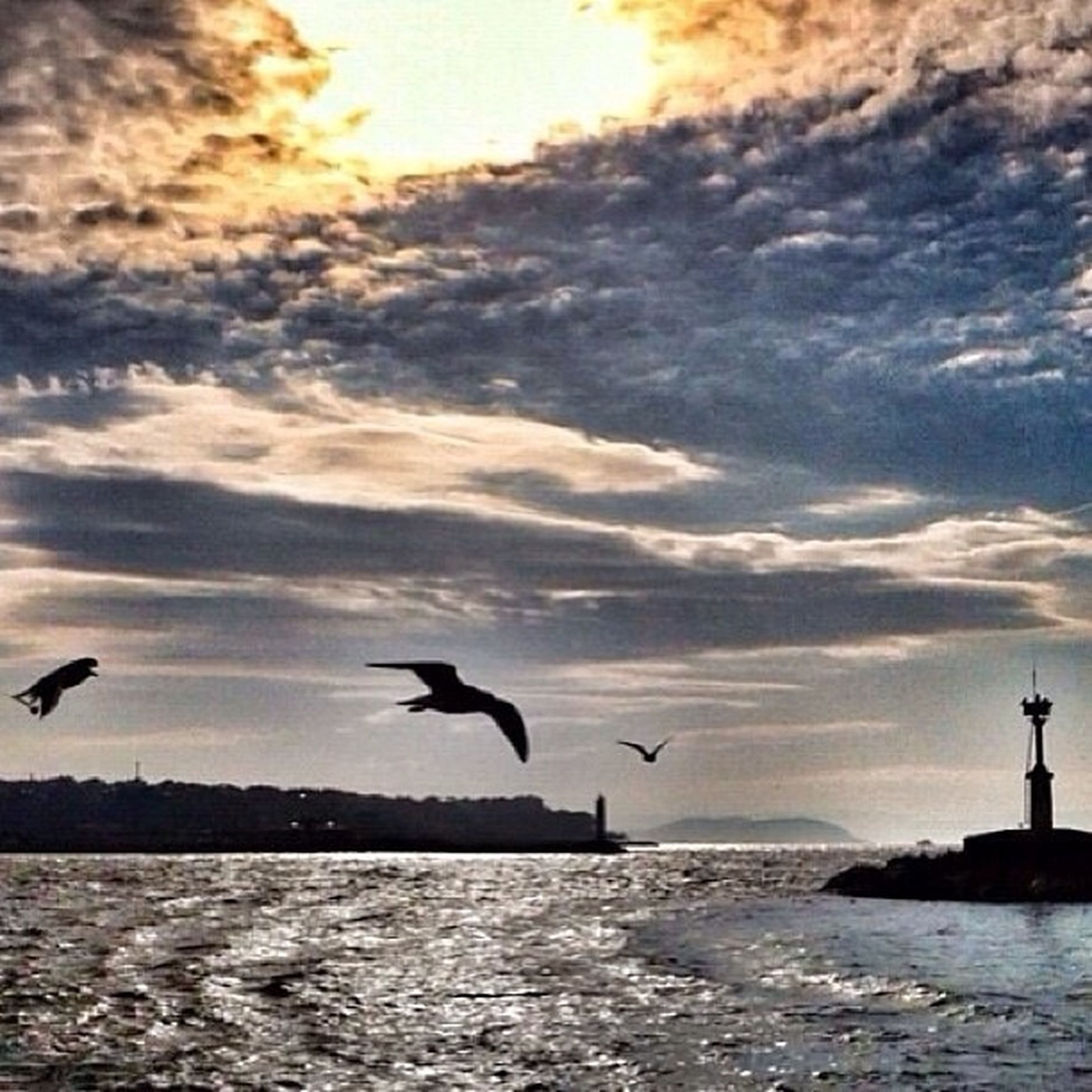 bird, animal themes, animals in the wild, wildlife, water, flying, sky, sea, seagull, spread wings, sunset, cloud - sky, silhouette, waterfront, horizon over water, nature, beauty in nature, cloud, scenics, tranquility